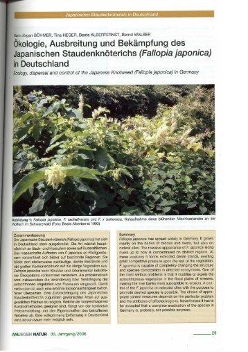 Fallopia japonica - ILZ