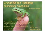 Gründe für den Rückgang heimischer Amphibien - Fisch und Frosch