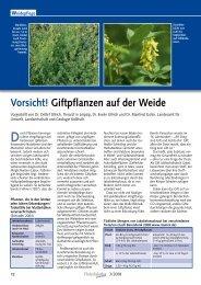 Vorsicht! Giftpflanzen auf der Weide