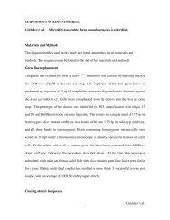1 Giraldez et al. SUPPORTING ONLINE MATERIAL ... - Bartel Lab