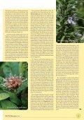 Iberogast® - phytotherapie.co.at - Seite 5