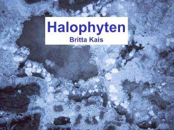 Halophyten - Heidelberg - Universität Heidelberg