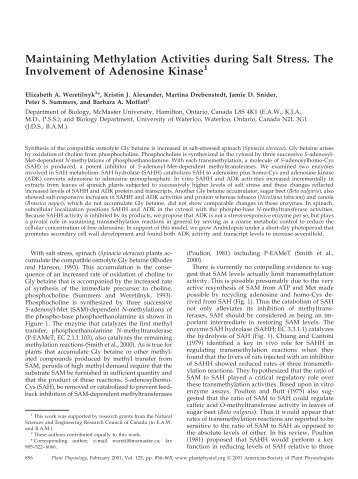 Maintaining Methylation Activities during Salt ... - Plant Physiology