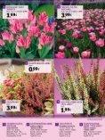 zum PDF - Gartencenter Streb - Seite 5