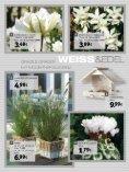 zum PDF - Gartencenter Streb - Seite 7