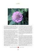 Wiesenklee (Rotklee) - Lebensharmonie Stettler - Seite 2