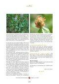 Wiesenklee (Rotklee) - Lebensharmonie Stettler - Seite 3