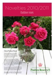 Outdoor roses