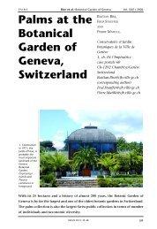 Palms at the Botanical Garden of Geneva, Switzerland
