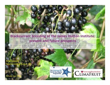 Blackcurrant breeding at the James Hutton Institute ... - Log on