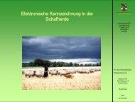 Elektronische Kennzeichnung in der Schafherde - Sachsen-Anhalt
