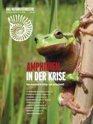 Amphibien in der Krise - Naturhistorisches Museum Wien