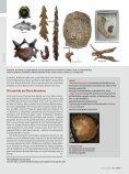 Amphibien in der Krise - Naturhistorisches Museum Wien - Seite 7