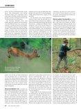 060 065 Nachsuche Rehwild - Wild und Hund - Seite 3