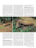 060 065 Nachsuche Rehwild - Wild und Hund - Seite 4