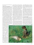 060 065 Nachsuche Rehwild - Wild und Hund - Seite 6
