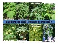 (Microsoft PowerPoint - ferrini L\222albero in citt ... - Il Verde Editoriale