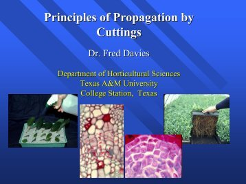 Principles of Propagation by Cuttings Cuttings - Aggie Horticulture ...