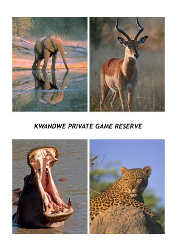 KWANDWE PRIVATE GAME RESERVE - 360 Grad Reisen