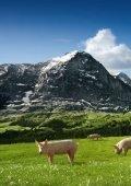 Geschäftsbericht 2008 von Proviande - Proviande Schweizer Fleisch - Seite 6