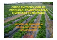Janelas de mercado e novas cultivares de Morangueiro
