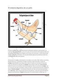 El sistema digestivo de un pollo - Finca Villa Elvira, un criadero de ...