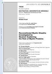 Le Rôle de la myéline dans les maladies dégénératives