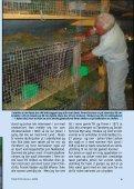 Tidsskrift for KANINAVL - Norges Kaninavlsforbund - Page 5