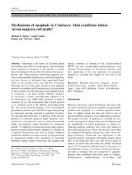 Mechanisms of apoptosis in Crustacea - Mitochondrial Physiology ...