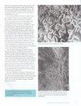 the Lichens of Yosemite - Yosemite Online - Page 5