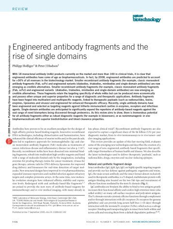 Engineered antibody fragments and the rise of single ... - Chemie
