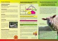 Parasitenbekämpfung beim Schaf - PRO ZOON Pharmazeutika