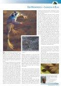 Naturschutz 03.10.indd - Seite 5