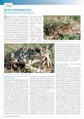 Naturschutz 03.10.indd - Seite 6