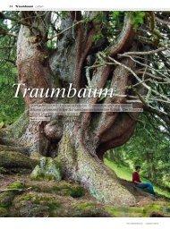 Traumbaumfotograf Michel Brunner - AUFRAD.CH Home