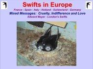Swifts in Europe - Highland Biodiversity