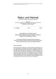 Baummarder-Artikel - MSOrni