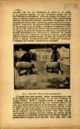 REVISTA DE HIGIENE SANIDAD VETERINARIA - Page 4