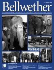 Bellwether 48 - University of Pennsylvania School of Veterinary ...