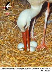 Storch Schweiz · Cigogne Suisse Bulletin 2011 / 2012 Nr. / No 41