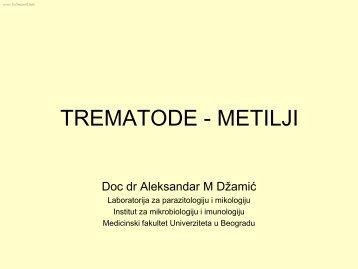 TREMATODE - METILJI - Beli Mantil