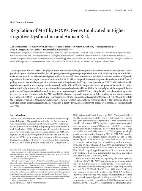 Autism Risk Genes Also Linked To Higher >> Regulation Of Met By Foxp2 Genes Implicated In Higher