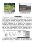 Funktionskontrolle von bepflanzten und unbepflanzten Bodenfiltern ... - Seite 3