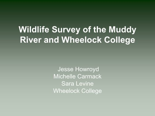 Wildlife Survey of the Muddy River and Wheelock College.