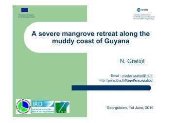 A severe mangrove retreat along the muddy coast of Guyana - LTHE