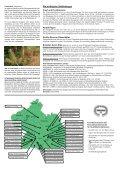 Die Douglasie (Pseudotsuga menziesii) Anbau und ... - EZG - Seite 4
