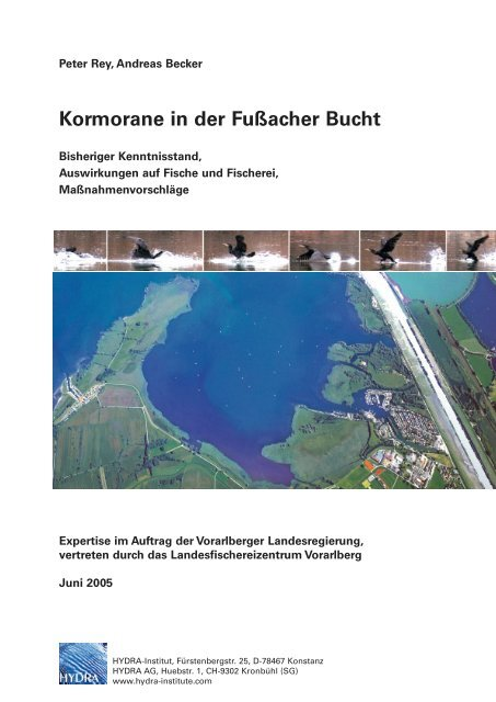 Kormorane in der Fußacher Bucht - HYDRA-Institute