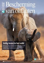 Bescherming van olifanten - International  Fund for Animal Welfare