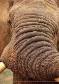 Bescherming van olifanten - International  Fund for Animal Welfare - Page 2