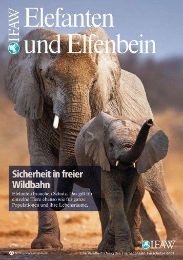 Elefanten und Elfenbein